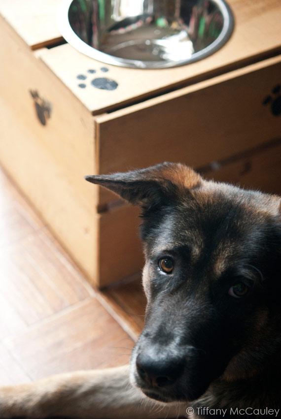 Elevated Dog Feeder