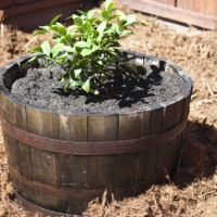 How To Fix Loose Rings On An Old Wine Barrel Planter