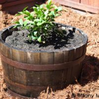 How To Fix An Old Wine Barrel Planter